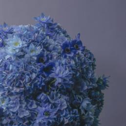 marimo-blue-2