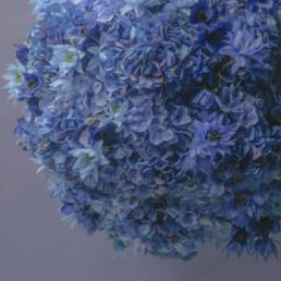 marimo-blue-3