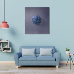 marimo-blue-ambiente