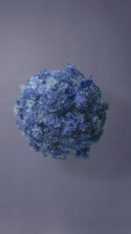 marimo-blue